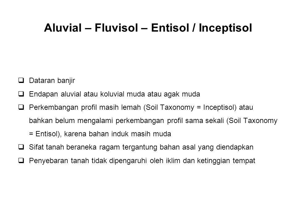 Aluvial – Fluvisol – Entisol / Inceptisol  Dataran banjir  Endapan aluvial atau koluvial muda atau agak muda  Perkembangan profil masih lemah (Soil