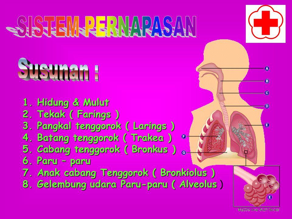 a.Memelihara sikap & posisi tubuh b.Menahan rongga perut oleh otot perut c.Menahan tekanan darah 1.Kepala otot 2.Empal otot 3.Ekor otot
