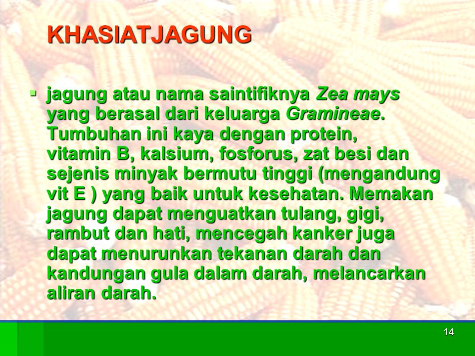 14 KHASIATJAGUNG  jagung atau nama saintifiknya Zea mays yang berasal dari keluarga Gramineae. Tumbuhan ini kaya dengan protein, vitamin B, kalsium,