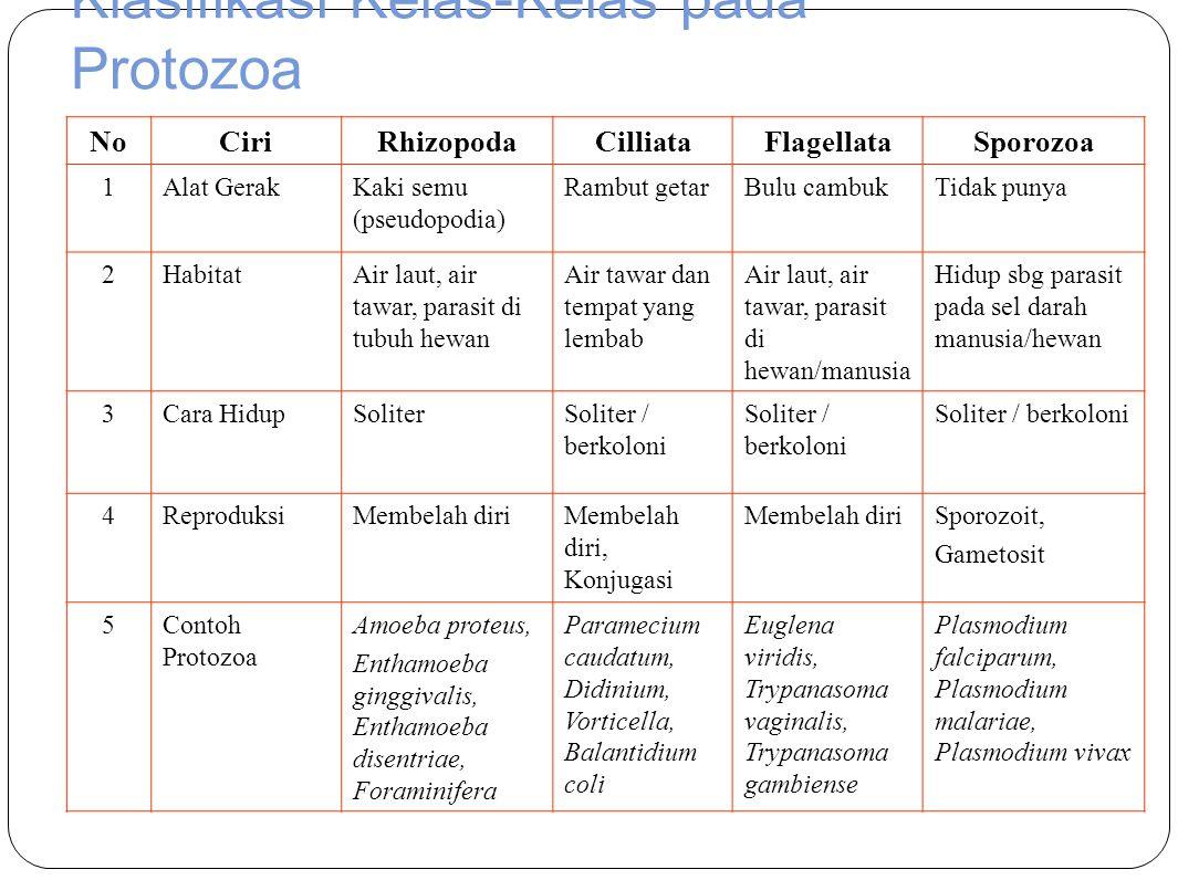 Klasifikasi Kelas-Kelas pada Protozoa NoCiriRhizopodaCilliataFlagellataSporozoa 1Alat GerakKaki semu (pseudopodia) Rambut getarBulu cambukTidak punya 2HabitatAir laut, air tawar, parasit di tubuh hewan Air tawar dan tempat yang lembab Air laut, air tawar, parasit di hewan/manusia Hidup sbg parasit pada sel darah manusia/hewan 3Cara HidupSoliterSoliter / berkoloni 4ReproduksiMembelah diriMembelah diri, Konjugasi Membelah diriSporozoit, Gametosit 5Contoh Protozoa Amoeba proteus, Enthamoeba ginggivalis, Enthamoeba disentriae, Foraminifera Paramecium caudatum, Didinium, Vorticella, Balantidium coli Euglena viridis, Trypanasoma vaginalis, Trypanasoma gambiense Plasmodium falciparum, Plasmodium malariae, Plasmodium vivax