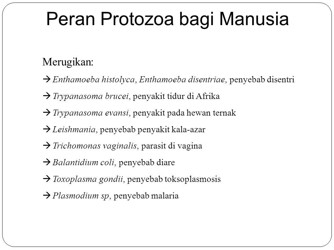 Peran Protozoa bagi Manusia Merugikan:  Enthamoeba histolyca, Enthamoeba disentriae, penyebab disentri  Trypanasoma brucei, penyakit tidur di Afrika  Trypanasoma evansi, penyakit pada hewan ternak  Leishmania, penyebab penyakit kala-azar  Trichomonas vaginalis, parasit di vagina  Balantidium coli, penyebab diare  Toxoplasma gondii, penyebab toksoplasmosis  Plasmodium sp, penyebab malaria
