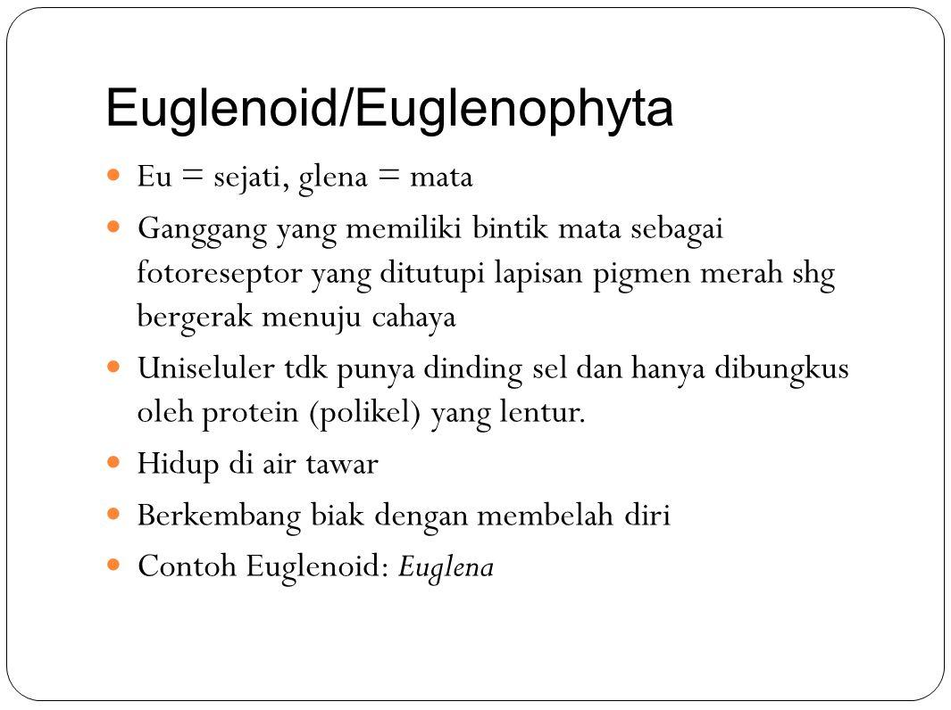 Euglenoid/Euglenophyta Eu = sejati, glena = mata Ganggang yang memiliki bintik mata sebagai fotoreseptor yang ditutupi lapisan pigmen merah shg bergerak menuju cahaya Uniseluler tdk punya dinding sel dan hanya dibungkus oleh protein (polikel) yang lentur.
