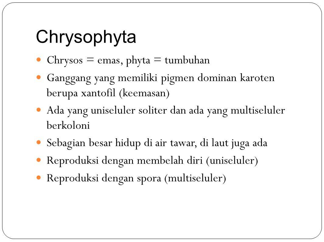 Chrysophyta Chrysos = emas, phyta = tumbuhan Ganggang yang memiliki pigmen dominan karoten berupa xantofil (keemasan) Ada yang uniseluler soliter dan ada yang multiseluler berkoloni Sebagian besar hidup di air tawar, di laut juga ada Reproduksi dengan membelah diri (uniseluler) Reproduksi dengan spora (multiseluler)
