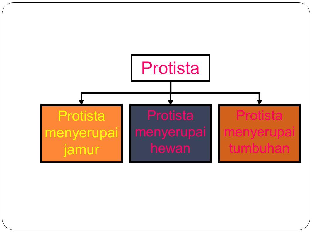 Protista menyerupai jamur Merupakan : Jamur parasit (hidup di air  pengurai bersel 1) Jamur predator (mirip amoeba dan berlendir) Menghasilkan spora Terdiri dari JAMUR AIR (OOMYCOTA) JAMUR LENDIR (MYXOMYCOTA)