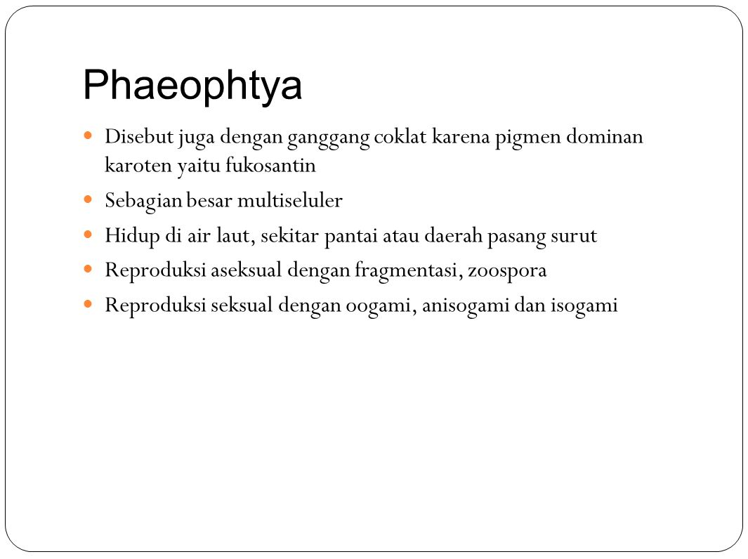 Phaeophtya Disebut juga dengan ganggang coklat karena pigmen dominan karoten yaitu fukosantin Sebagian besar multiseluler Hidup di air laut, sekitar pantai atau daerah pasang surut Reproduksi aseksual dengan fragmentasi, zoospora Reproduksi seksual dengan oogami, anisogami dan isogami