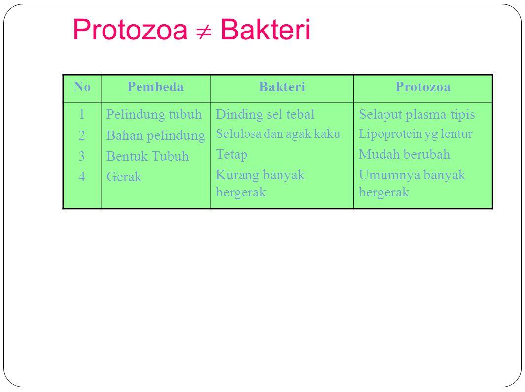 Protozoa  Bakteri NoPembedaBakteriProtozoa 12341234 Pelindung tubuh Bahan pelindung Bentuk Tubuh Gerak Dinding sel tebal Selulosa dan agak kaku Tetap Kurang banyak bergerak Selaput plasma tipis Lipoprotein yg lentur Mudah berubah Umumnya banyak bergerak