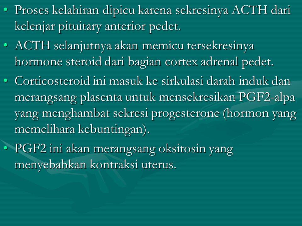 Proses kelahiran dipicu karena sekresinya ACTH dari kelenjar pituitary anterior pedet.Proses kelahiran dipicu karena sekresinya ACTH dari kelenjar pit