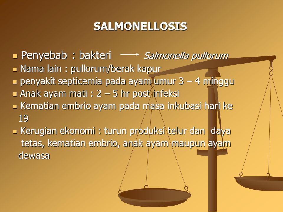 SALMONELLOSIS Penyebab : bakteri Salmonella pullorum Penyebab : bakteri Salmonella pullorum Nama lain : pullorum/berak kapur Nama lain : pullorum/bera
