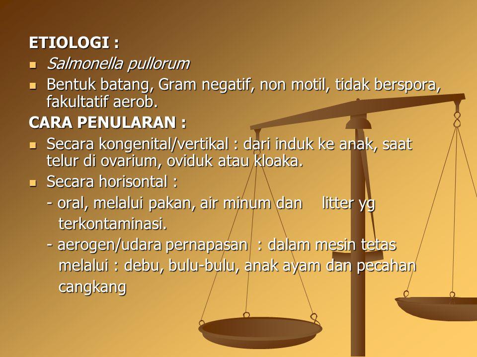 ETIOLOGI : Salmonella pullorum Salmonella pullorum Bentuk batang, Gram negatif, non motil, tidak berspora, fakultatif aerob. Bentuk batang, Gram negat