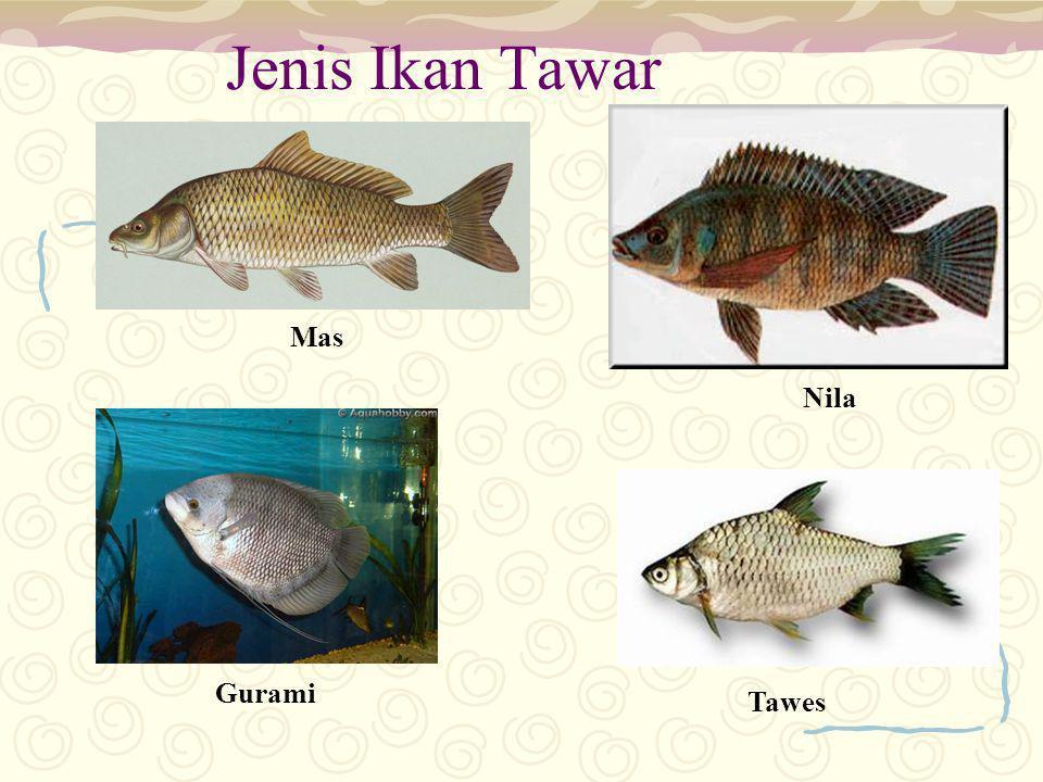 Jenis Ikan Tawar Mas Nila Tawes Gurami