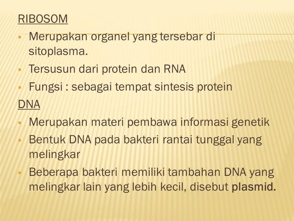 RIBOSOM  Merupakan organel yang tersebar di sitoplasma.  Tersusun dari protein dan RNA  Fungsi : sebagai tempat sintesis protein DNA  Merupakan ma