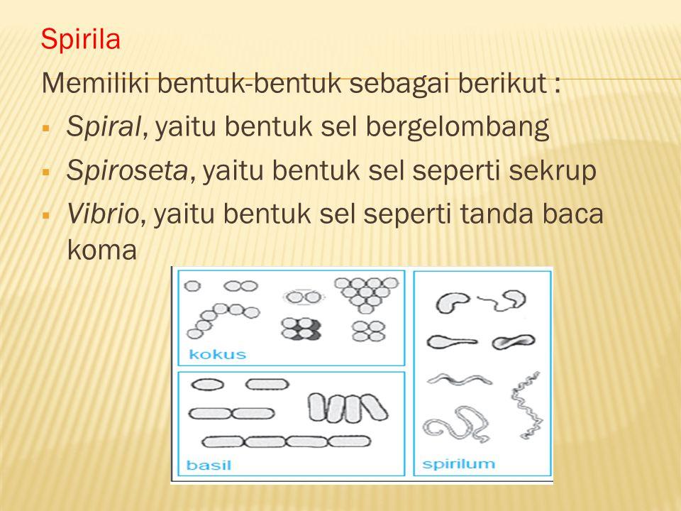 Spirila Memiliki bentuk-bentuk sebagai berikut :  Spiral, yaitu bentuk sel bergelombang  Spiroseta, yaitu bentuk sel seperti sekrup  Vibrio, yaitu