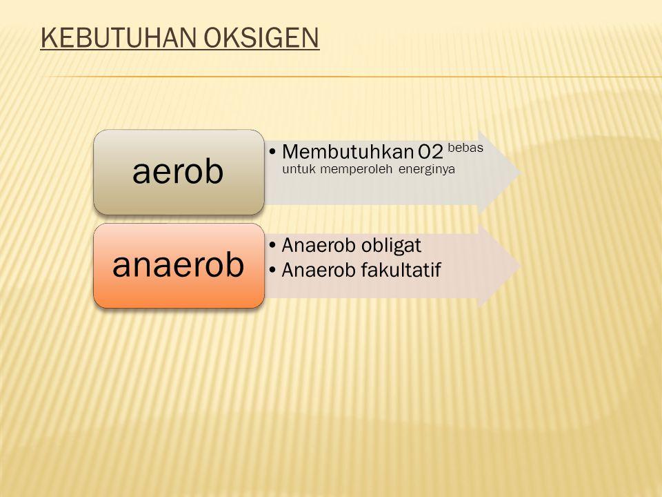 KEBUTUHAN OKSIGEN Membutuhkan O2 bebas untuk memperoleh energinya aerob Anaerob obligat Anaerob fakultatif anaerob