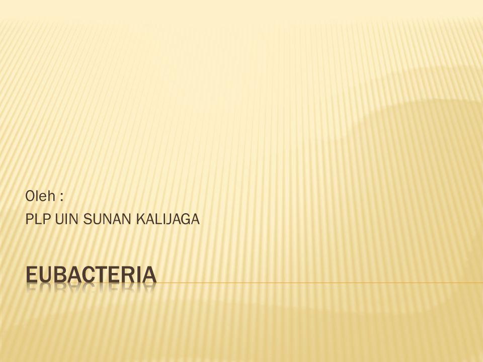 Eubacteria berasal dari awalan eu (sejati) dan bacteria (bacteri).
