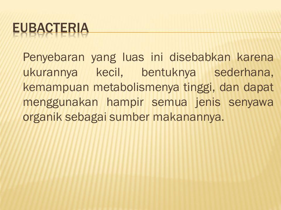  Sel bakteri berukuran sangat kecil dan bentuknya sederhana.