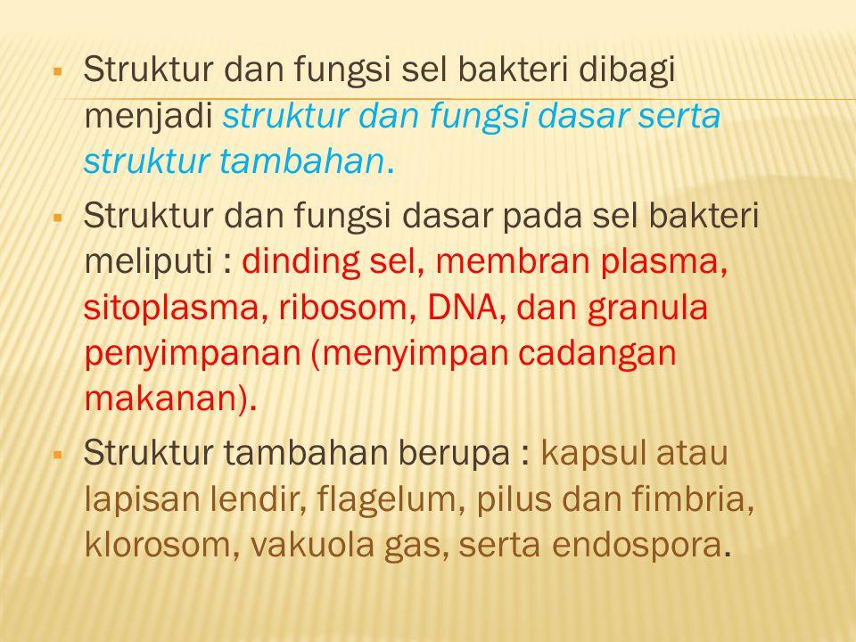 Struktur dan fungsi sel bakteri dibagi menjadi struktur dan fungsi dasar serta struktur tambahan.  Struktur dan fungsi dasar pada sel bakteri melip