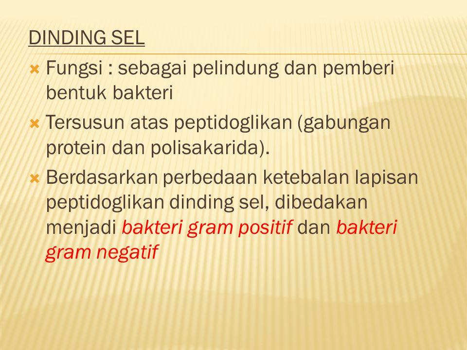 Menguntungkan 1.Sebagai pengurai (Detritus) contohnya (E.