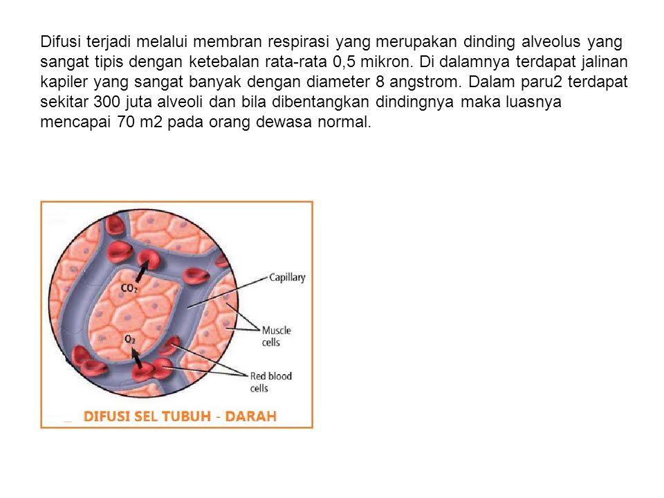 Sistem respirasi bekerja melalui 3 tahapan yaitu : 1. Ventilasi 2. Difusi 3. Transportasi  Ventilasi adalah : proses pertukaran udara antara atmosfer