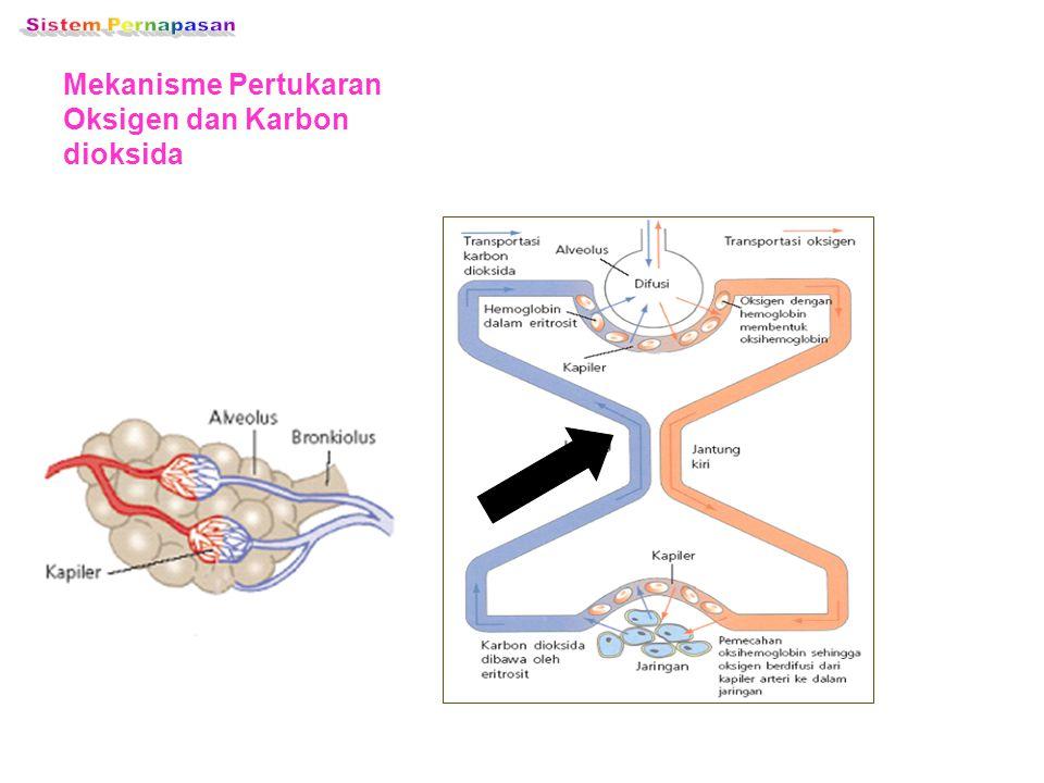 2. PERTUKARAN KARBONDIOKSIDA P.CO2 di jaringan tubuh = 60 mmHg à P. CO2 di vena = 47 mmHg à P. CO2 di alveolus (PCO2= 35 mmHg) atau luar tubuh = 0.3 m