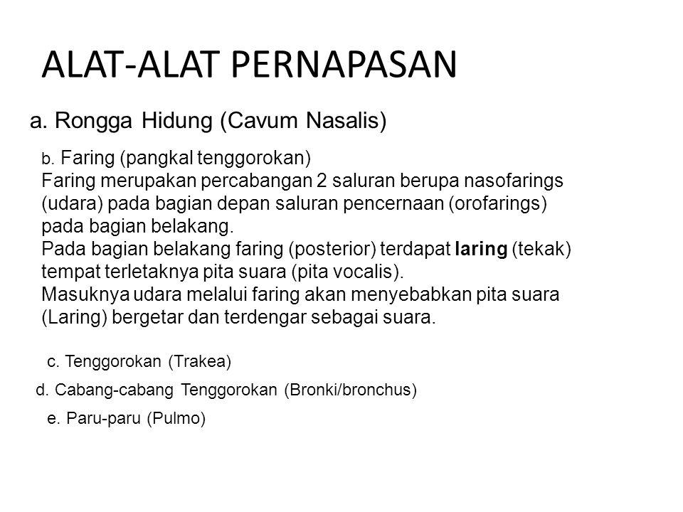ALAT-ALAT PERNAPASAN a.Rongga Hidung (Cavum Nasalis) b.