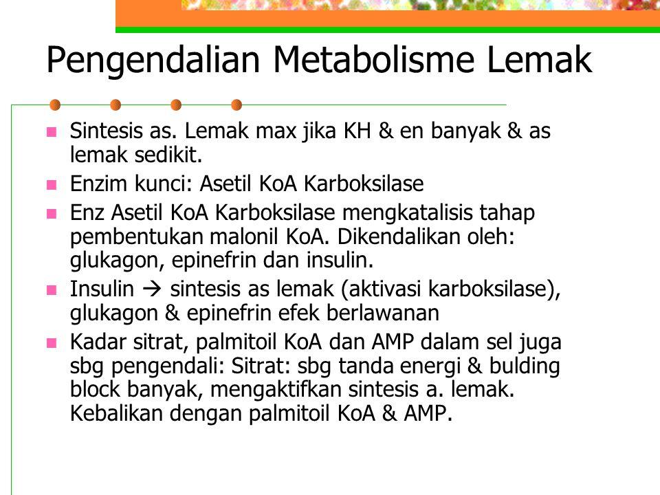 Pengendalian Metabolisme Lemak Sintesis as. Lemak max jika KH & en banyak & as lemak sedikit. Enzim kunci: Asetil KoA Karboksilase Enz Asetil KoA Karb