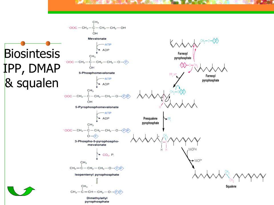 Biosintesis IPP, DMAP & squalen