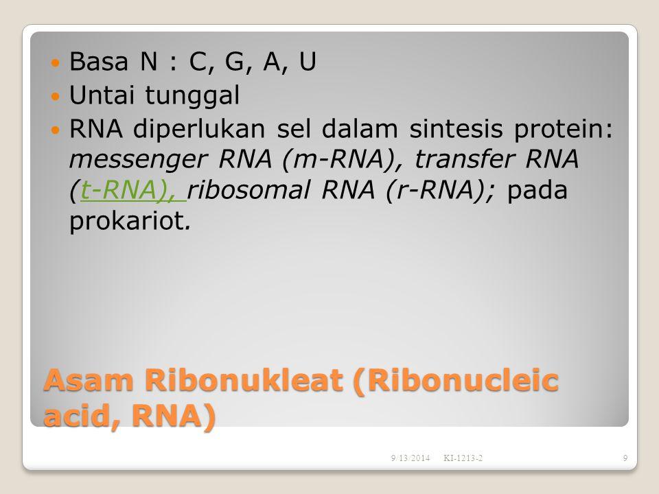 Asam deoksiribonukleat (Deoxyribonucleic acid, DNA) Basa Nitrogen penyusun: C,G,A,T Terdiri dari 2 untai ganda dengan konformasi heliks ganda.