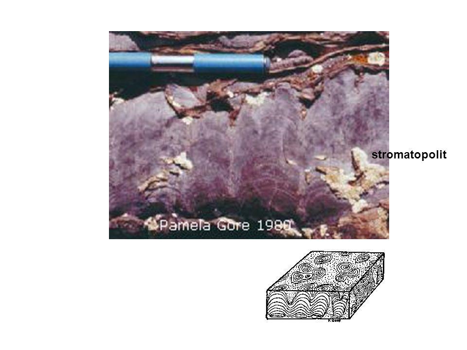 stromatopolit