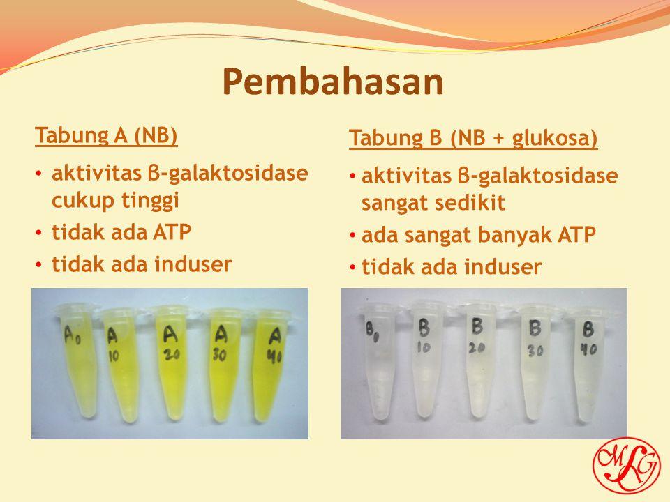 Tabung C (NB + glu + lak) aktivitas β-galaktosidase sangat sedikit ada sangat banyak ATP ada induser Tabung D (NB + laktosa) aktivitas β-galaktosidase cukup tinggi ada sedikit ATP ada induser Pembahasan (lanjutan)