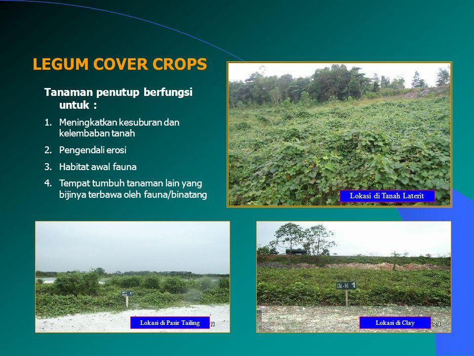 LEGUM COVER CROPS Lokasi di Pasir TailingLokasi di Clay Lokasi di Tanah Laterit Tanaman penutup berfungsi untuk : 1.Meningkatkan kesuburan dan kelemba