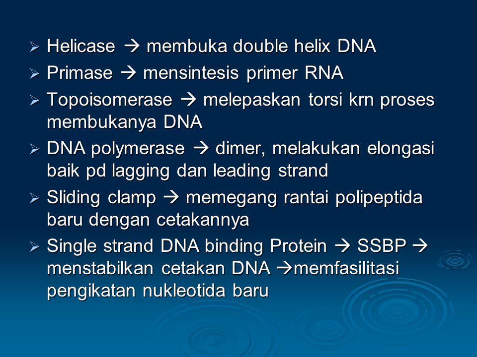  Helicase  membuka double helix DNA  Primase  mensintesis primer RNA  Topoisomerase  melepaskan torsi krn proses membukanya DNA  DNA polymerase  dimer, melakukan elongasi baik pd lagging dan leading strand  Sliding clamp  memegang rantai polipeptida baru dengan cetakannya  Single strand DNA binding Protein  SSBP  menstabilkan cetakan DNA  memfasilitasi pengikatan nukleotida baru