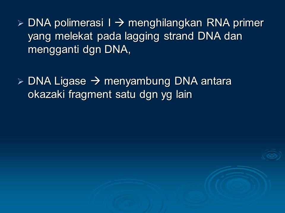  DNA polimerasi I  menghilangkan RNA primer yang melekat pada lagging strand DNA dan mengganti dgn DNA,  DNA Ligase  menyambung DNA antara okazaki