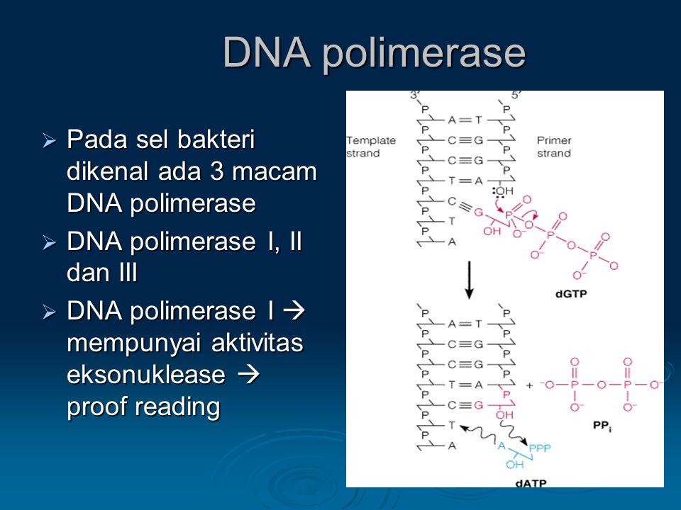 DNA polimerase  Pada sel bakteri dikenal ada 3 macam DNA polimerase  DNA polimerase I, II dan III  DNA polimerase I  mempunyai aktivitas eksonukle