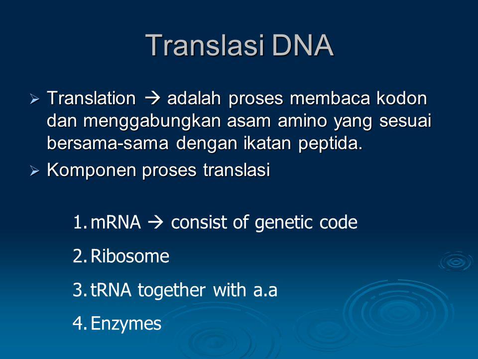 Translasi DNA  Translation  adalah proses membaca kodon dan menggabungkan asam amino yang sesuai bersama-sama dengan ikatan peptida.  Komponen pros