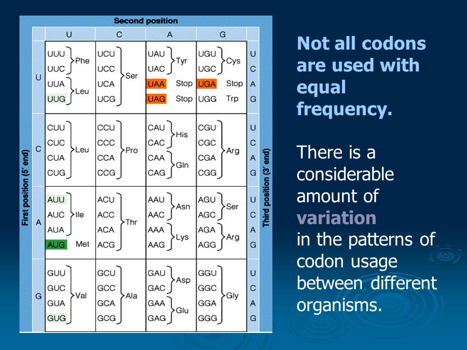Not all codons are used with equal frequency. There is a considerable amount of variation in the patterns of codon usage between different organisms.