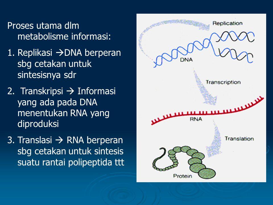 Translasi DNA  Translation  adalah proses membaca kodon dan menggabungkan asam amino yang sesuai bersama-sama dengan ikatan peptida.