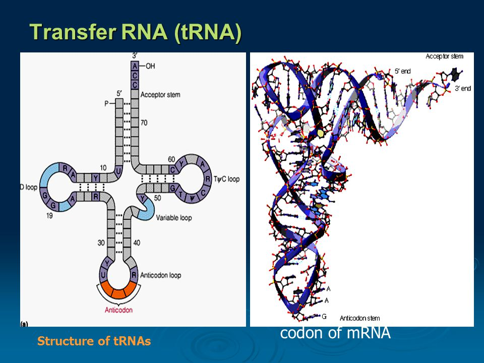 Transfer RNA (tRNA) composed of  a nucleic acid and a specific amino acid  provide the link between the nucleic acid sequence of mRNA and the amino