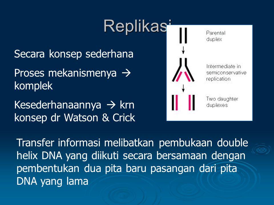 Replikasi Secara konsep sederhana Proses mekanismenya  komplek Kesederhanaannya  krn konsep dr Watson & Crick Transfer informasi melibatkan pembukaan double helix DNA yang diikuti secara bersamaan dengan pembentukan dua pita baru pasangan dari pita DNA yang lama
