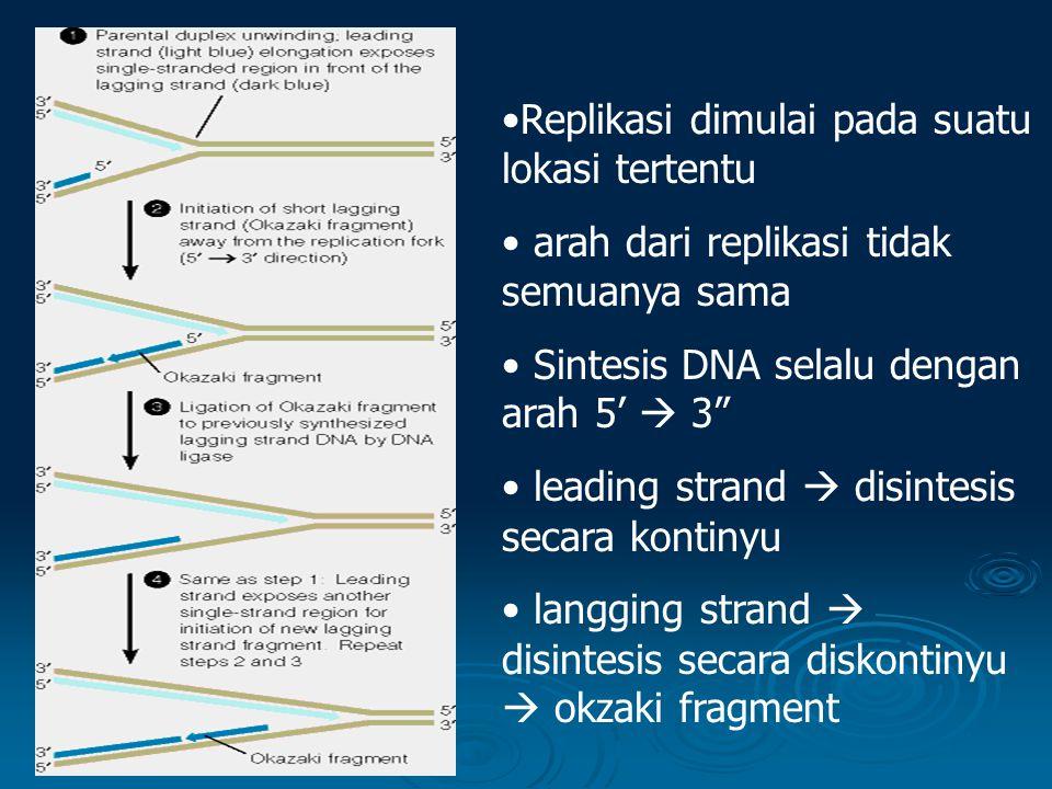 Replikasi dimulai pada suatu lokasi tertentu arah dari replikasi tidak semuanya sama Sintesis DNA selalu dengan arah 5'  3 leading strand  disintesis secara kontinyu langging strand  disintesis secara diskontinyu  okzaki fragment