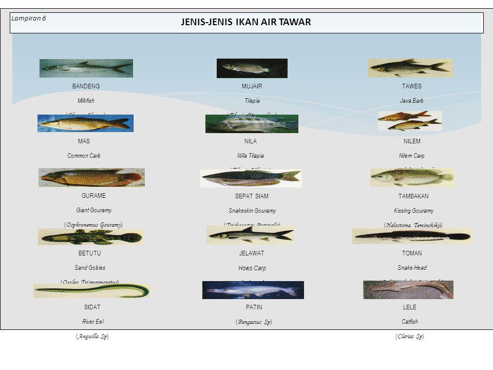 JENIS-JENIS IKAN AIR TAWAR BANDENG Milkfish ( Chanos Chanos ) MUJAIR Tilapia ( Tilapia Mossambica ) TAWES Java Barb ( Puntius Javanicus ) NILA Nilla T