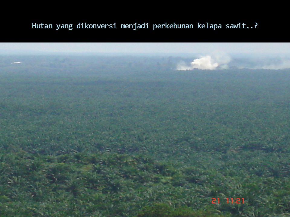 Hutan yang dikonversi menjadi perkebunan kelapa sawit..?