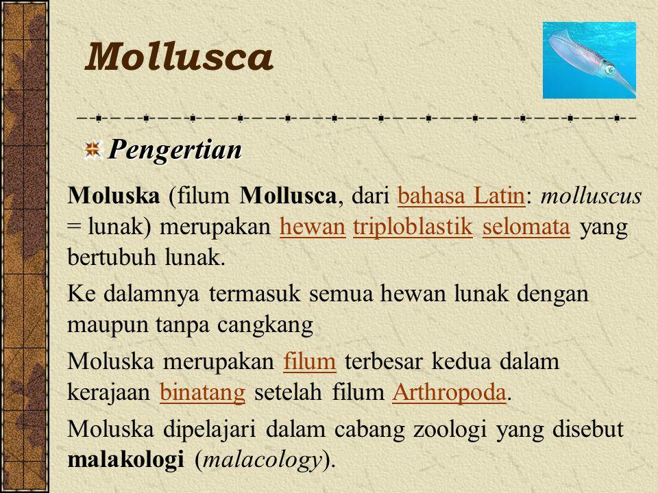 Mollusca Pengertian Moluska (filum Mollusca, dari bahasa Latin: molluscus = lunak) merupakan hewan triploblastik selomata yang bertubuh lunak.bahasa Latinhewantriploblastikselomata Ke dalamnya termasuk semua hewan lunak dengan maupun tanpa cangkang Moluska merupakan filum terbesar kedua dalam kerajaan binatang setelah filum Arthropoda.filumbinatangArthropoda Moluska dipelajari dalam cabang zoologi yang disebut malakologi (malacology).