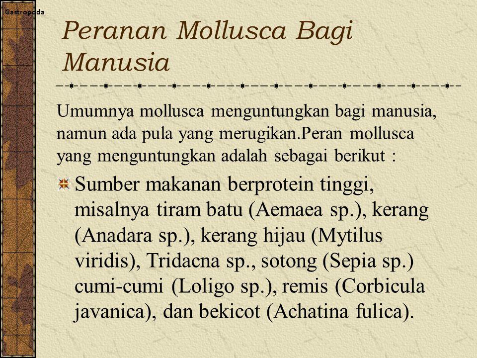 Peranan Mollusca Bagi Manusia Gastropoda Umumnya mollusca menguntungkan bagi manusia, namun ada pula yang merugikan.Peran mollusca yang menguntungkan adalah sebagai berikut : Sumber makanan berprotein tinggi, misalnya tiram batu (Aemaea sp.), kerang (Anadara sp.), kerang hijau (Mytilus viridis), Tridacna sp., sotong (Sepia sp.) cumi-cumi (Loligo sp.), remis (Corbicula javanica), dan bekicot (Achatina fulica).