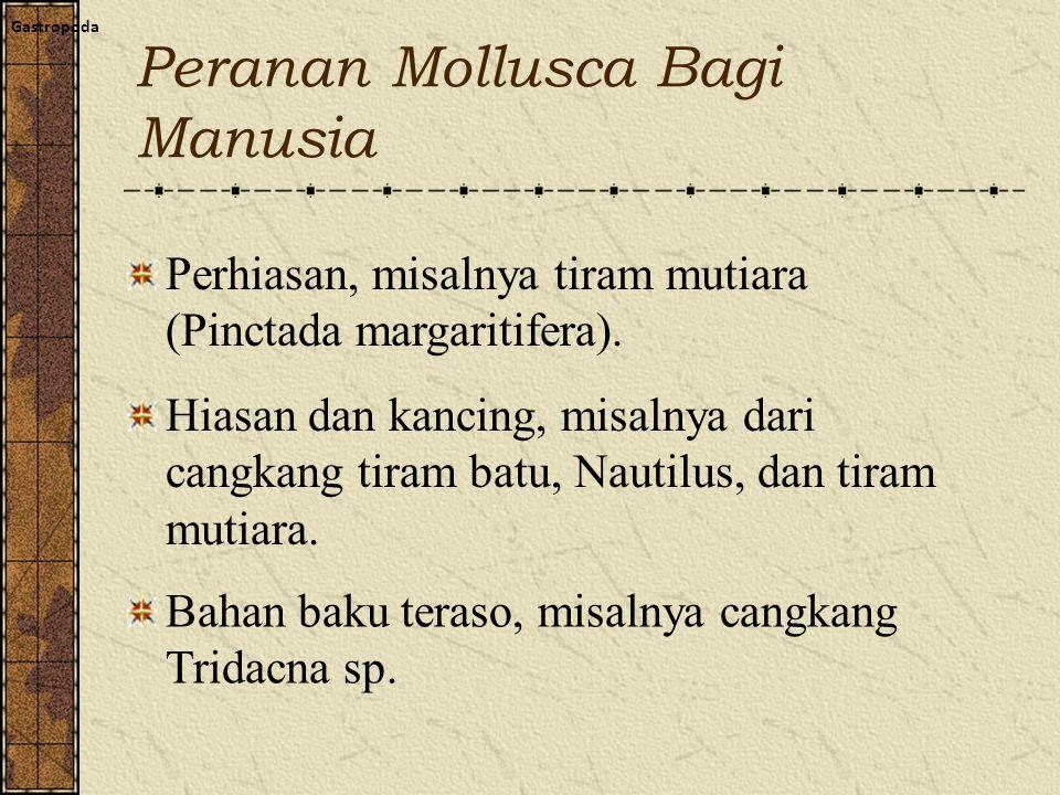Peranan Mollusca Bagi Manusia Gastropoda Perhiasan, misalnya tiram mutiara (Pinctada margaritifera). Hiasan dan kancing, misalnya dari cangkang tiram