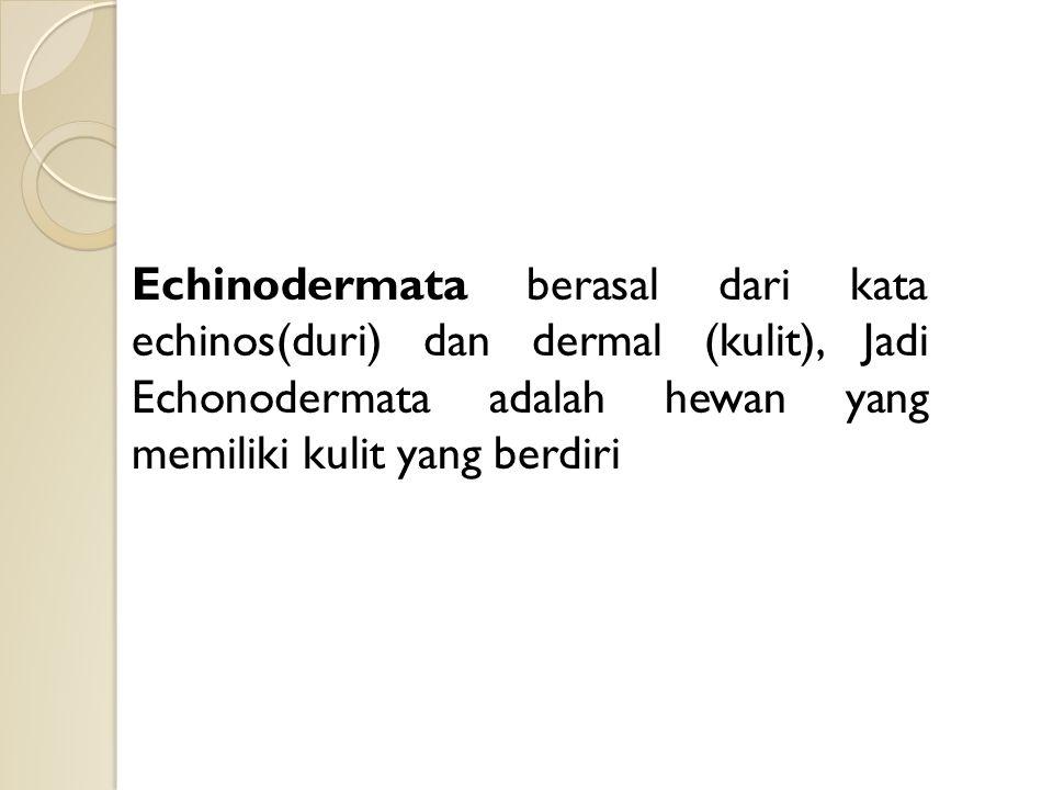 Echinodermata berasal dari kata echinos(duri) dan dermal (kulit), Jadi Echonodermata adalah hewan yang memiliki kulit yang berdiri