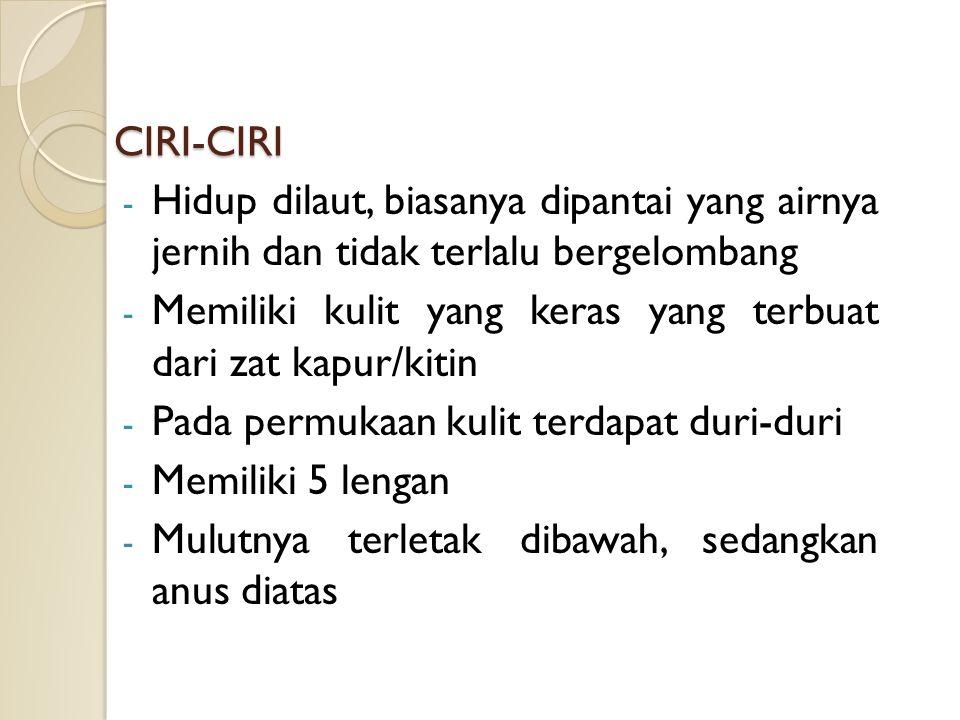 CIRI-CIRI - Hidup dilaut, biasanya dipantai yang airnya jernih dan tidak terlalu bergelombang - Memiliki kulit yang keras yang terbuat dari zat kapur/