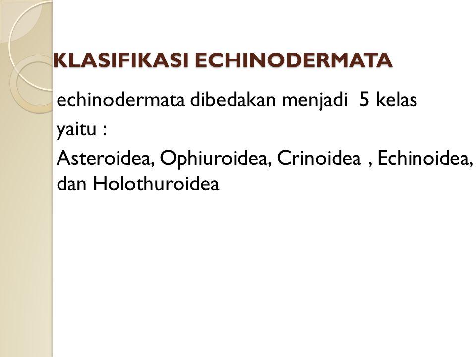 KLASIFIKASI ECHINODERMATA echinodermata dibedakan menjadi 5 kelas yaitu : Asteroidea, Ophiuroidea, Crinoidea, Echinoidea, dan Holothuroidea