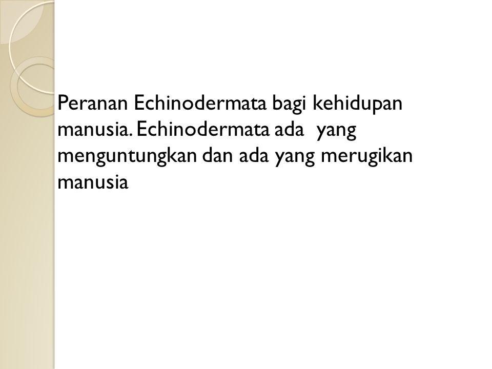 Peranan Echinodermata bagi kehidupan manusia.