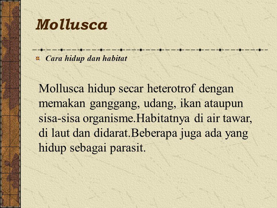 Mollusca Cara hidup dan habitat Mollusca hidup secar heterotrof dengan memakan ganggang, udang, ikan ataupun sisa-sisa organisme.Habitatnya di air tawar, di laut dan didarat.Beberapa juga ada yang hidup sebagai parasit.