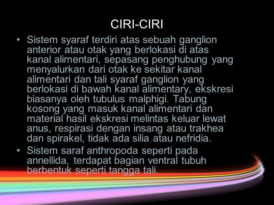 CIRI-CIRI Sistem syaraf terdiri atas sebuah ganglion anterior atau otak yang berlokasi di atas kanal alimentari, sepasang penghubung yang menyalurkan